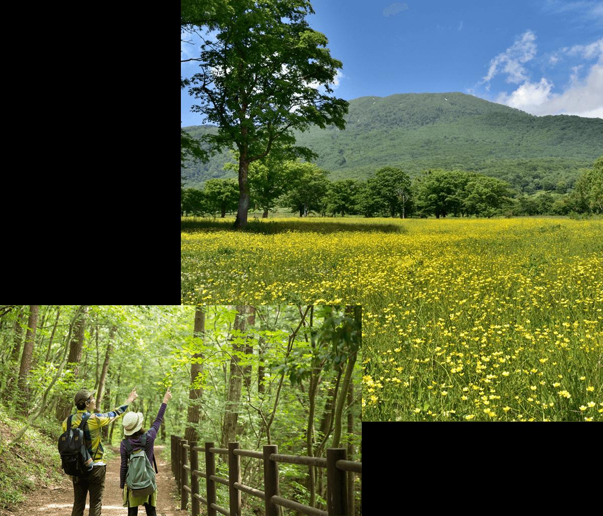 笹ヶ峰高原
